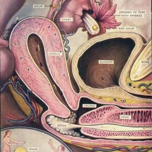 50999d7a1a1e731c6e5347079eaded42--science-illustration-medical-illustration